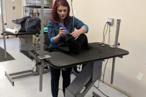 Avery's Pet Styling Salon Groomers wanted
