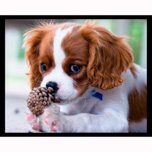 best-apartment-dogs-cavalier-king-charles-spaniel