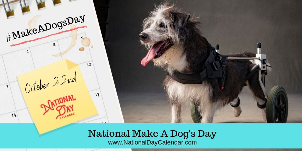 make a dog's day