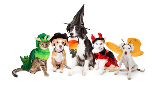 Dress Up Your Pet with These FUN Halloween Costumes