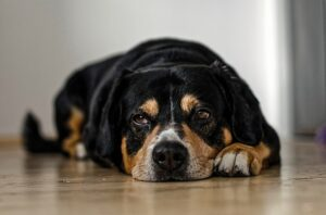 Is your Pet's Behavior Changing? It could be a Sign of Pain.