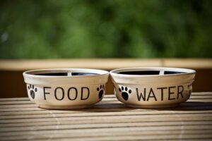 When traveling with pets, pack their dishes too!