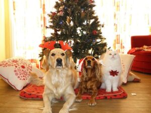 Dogs and Cats Sitting by Christmas Tree