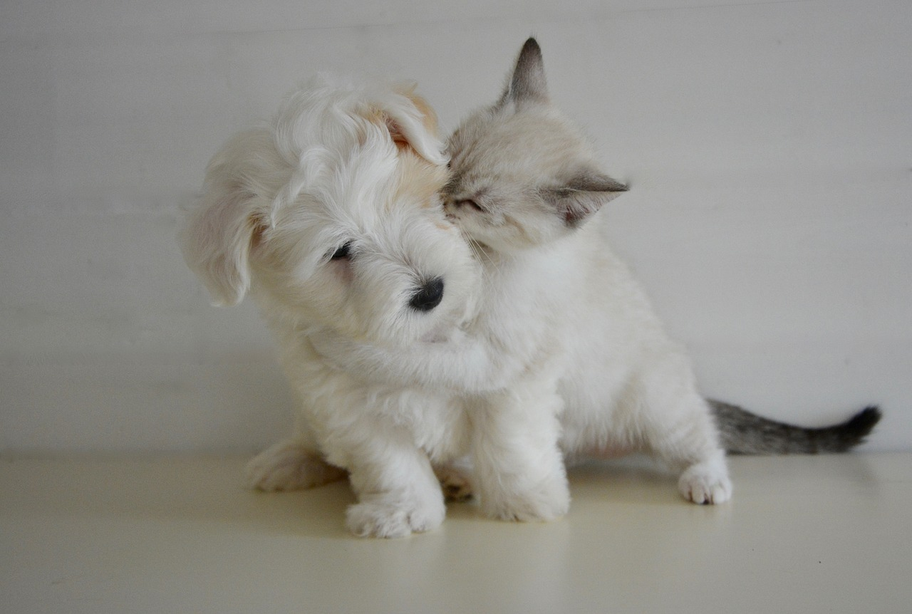 Kitten Playing with Puppy