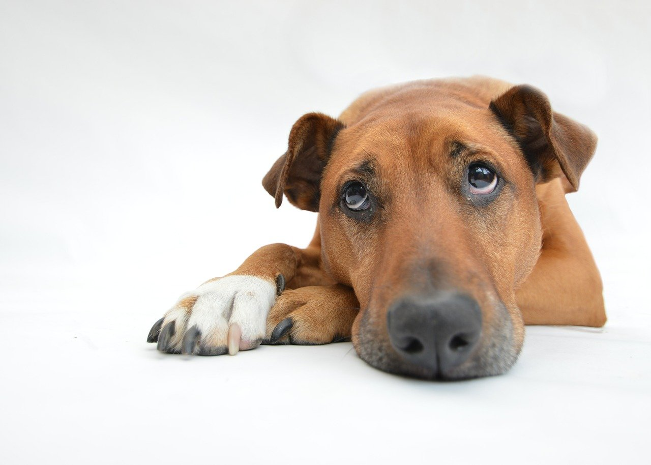7 Signs of Trouble with Your Your Pet that Should Not be Ignored