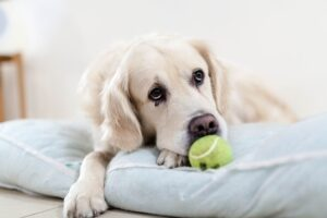 A Change in Your Pet's Activity Is a Sign of Trouble