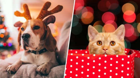Keep Your Pets Safe From Holiday Hazards