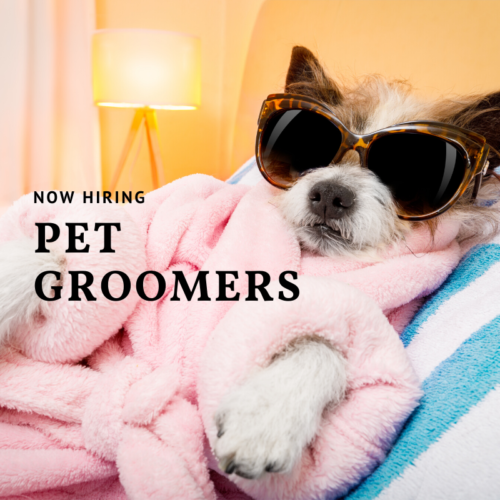 https://averyspetstyle.com/wp-content/uploads/2020/01/pet-groomers-500x500.png