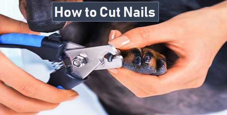Adequan is best for Dog Nails Cutting. You can Cut your dog's Nail at Home