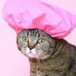 A Good Attitude Will Help Your Pet Love Baths!