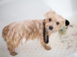 Teach Your Pet to Love Baths: 8 Tips