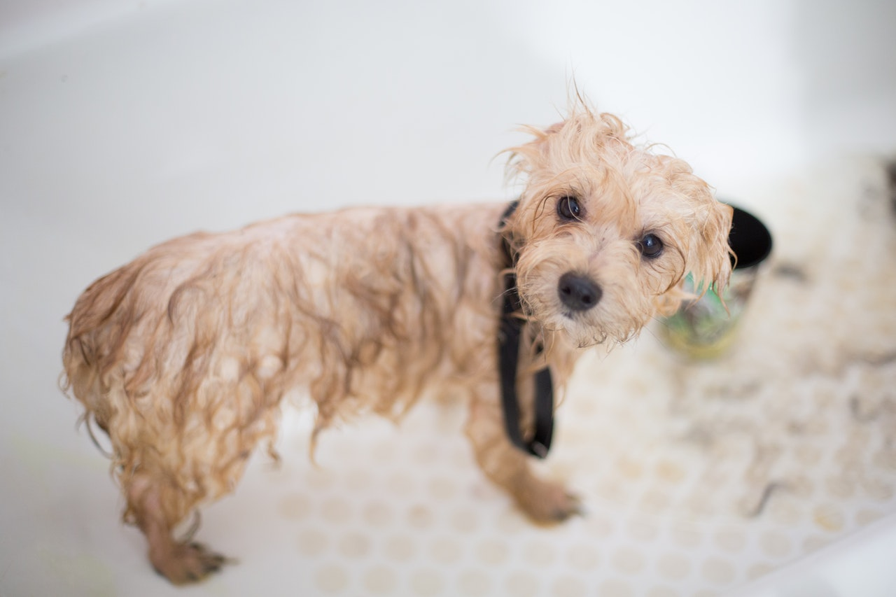 Teach Your Pet to Love Baths!