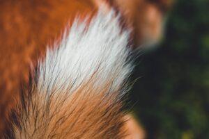 Your Pet's Hair is Not a Pet Allergen