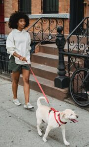 African American Black Woman Walking Dog