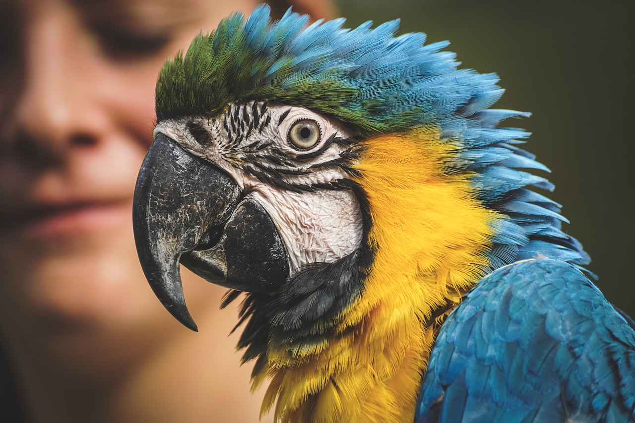 Amazon Parrot with Woman