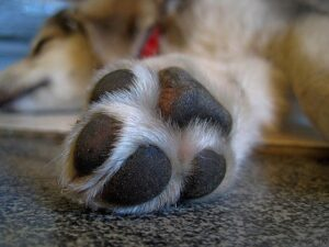 Dog's Paw resting on the ground
