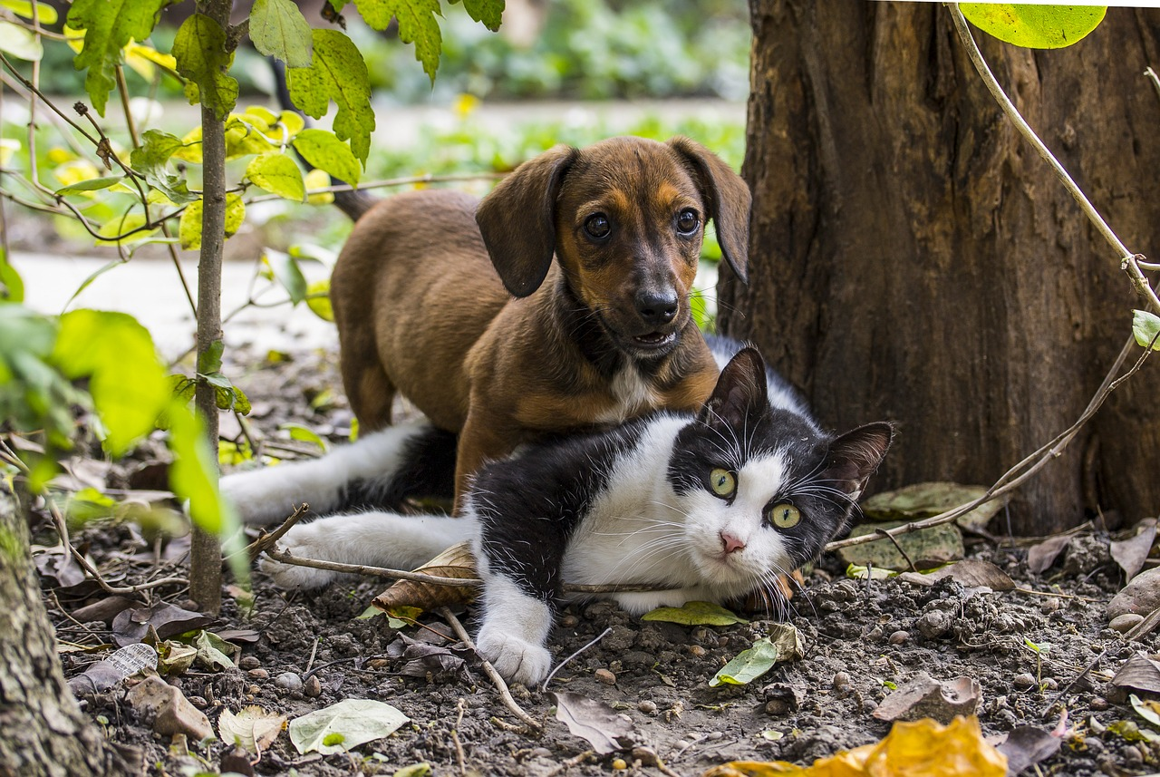Dog and Cat Playing on Ground